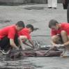 пожарно-спасательные виды спорта
